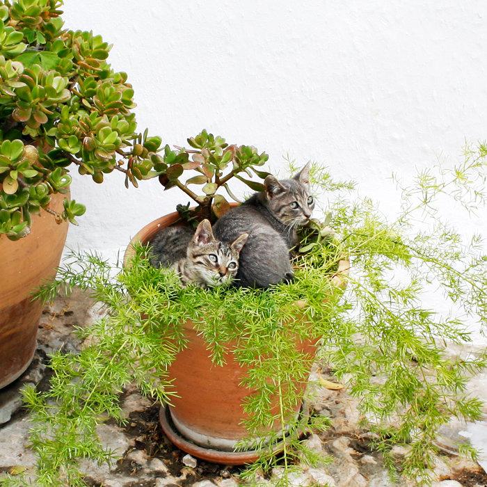 Cats in a flower pot. Photo: Sanjin Đumišić.