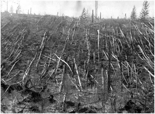 Broken trees in Tunguska. Photo: Evgeny Krinov.