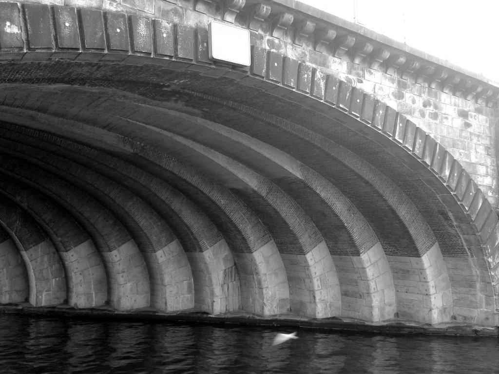Bird flying under the bridge. Photo: Sanjin Đumišić.