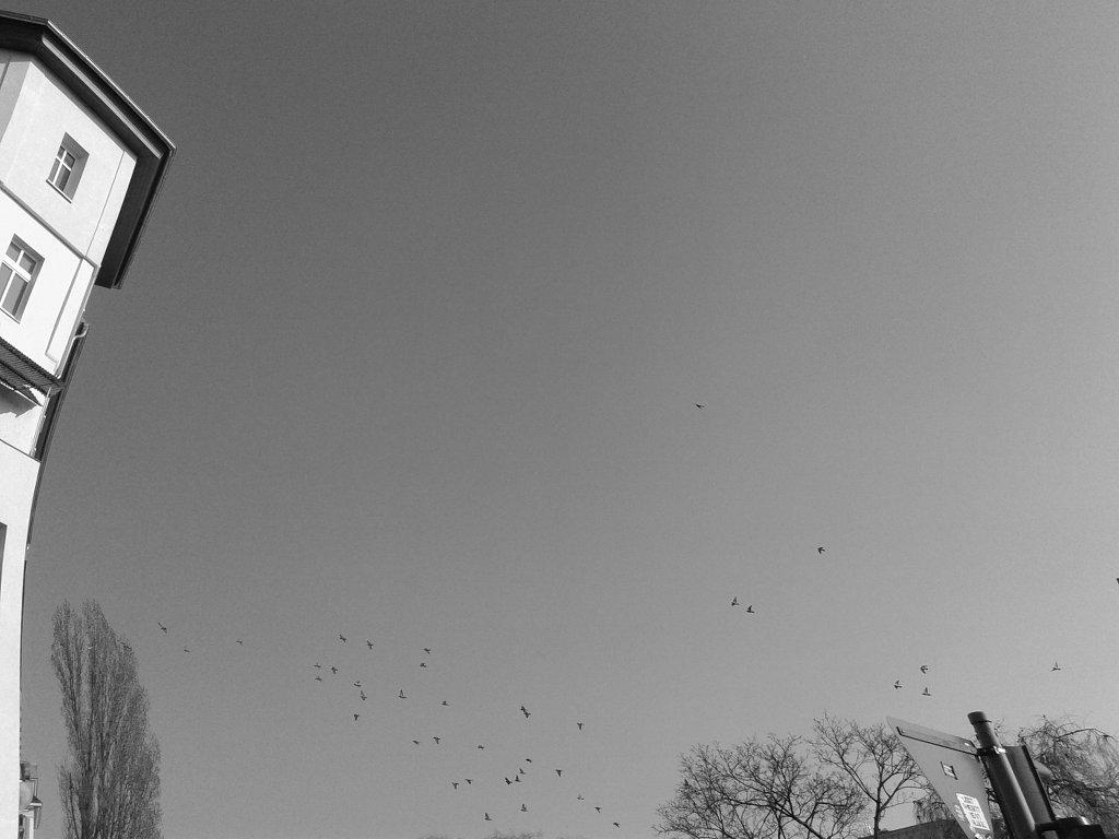 House, bird and sky. Photo: Sanjin Đumišić.