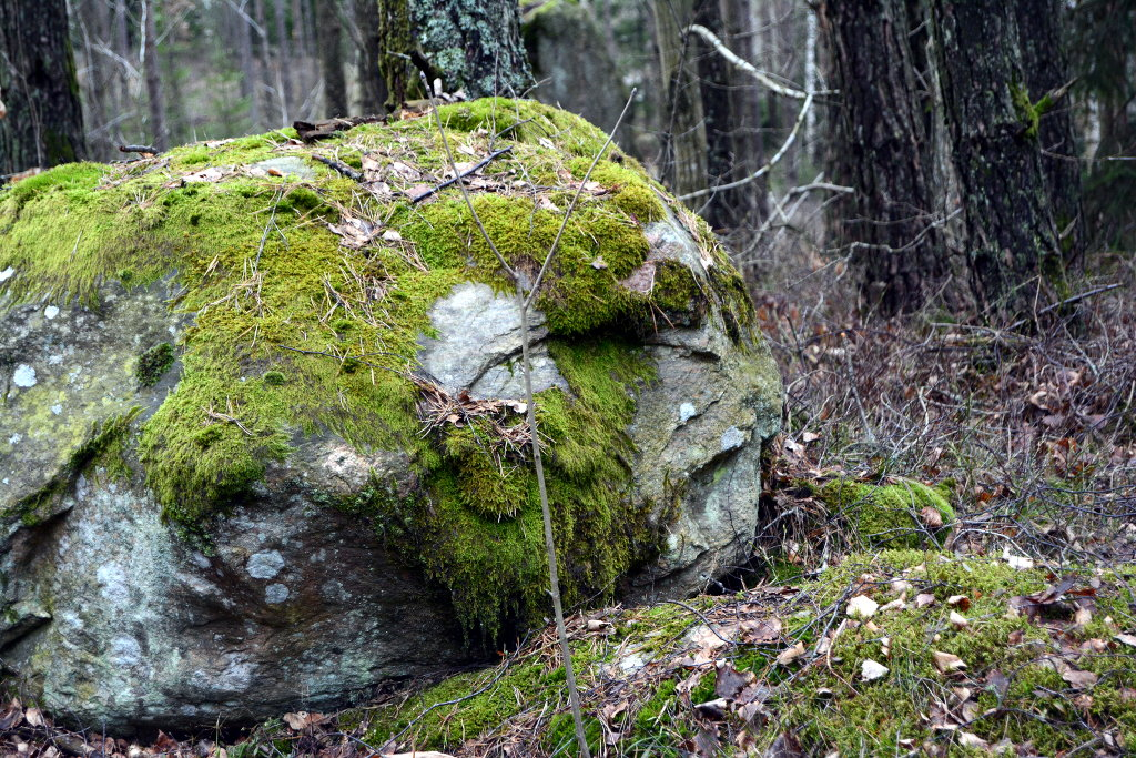 Stone face, or face in the stone? Don't ever forget that the dead stone our planet was, produced your consciousness. Respect nature and it too will see your face. Photo: Sanjin Đumišić.