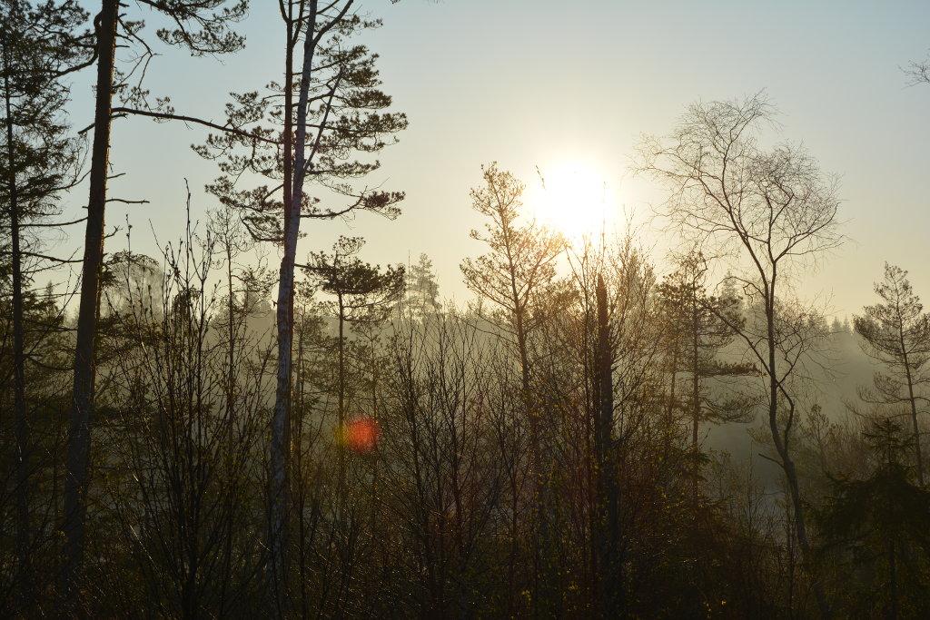 Swedish morning forest. Photo: Sanjin Đumišić.