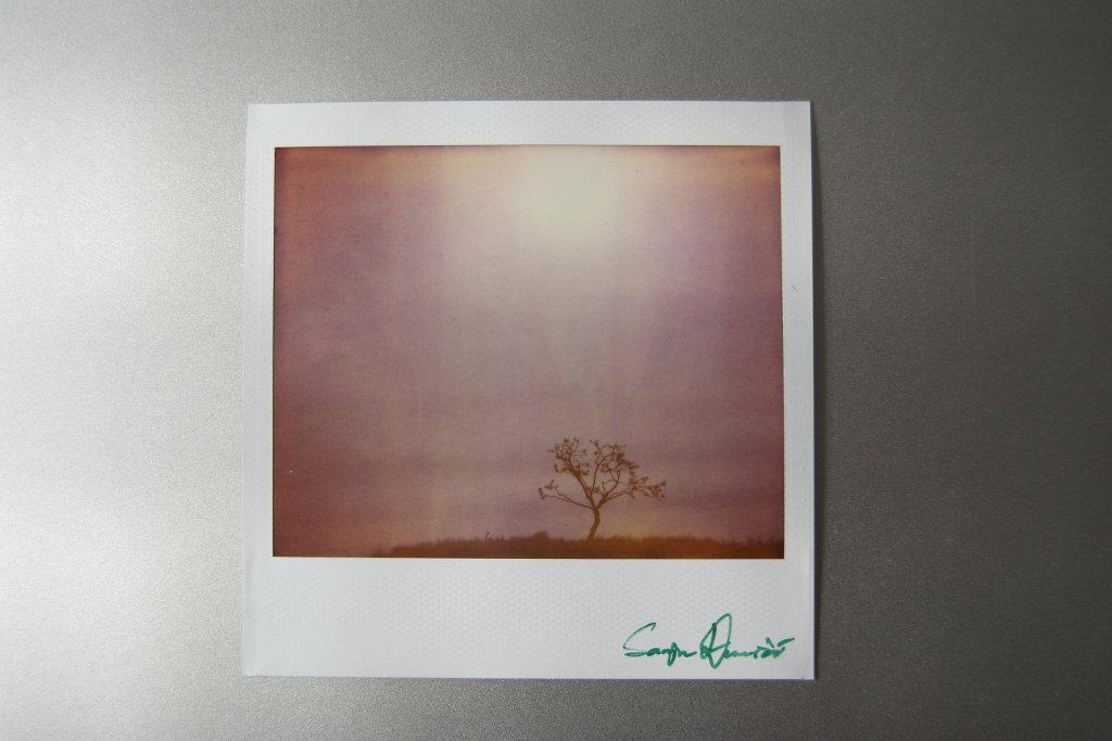Tree of life polaroid. Photo: Sanjin Đumišić.