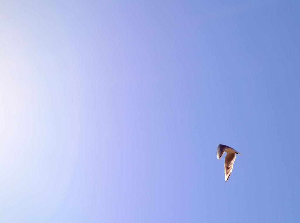 Bird. Photo: Sanjin Đumišić.