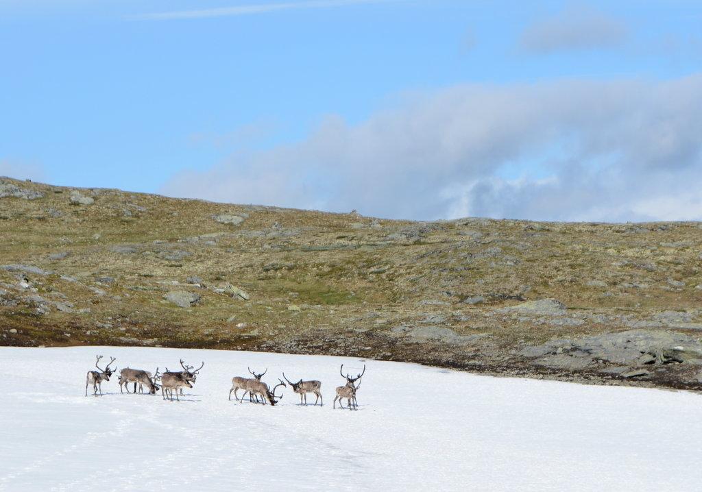 Norwegian mountainside – Sel, Lom & Sognefjell