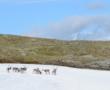 Norwegian mountainside – Ringebu and Venabu
