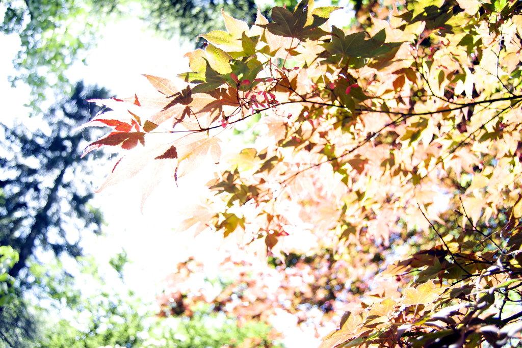 Philosophy is like a tree. Photo Sanjin Đumišić.