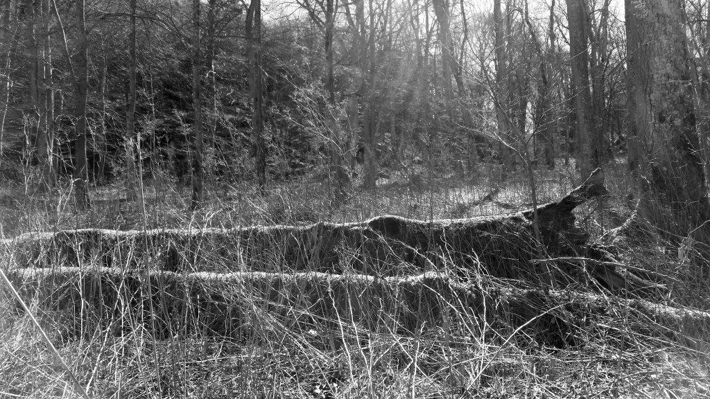 Dry cold vegetation. Photo: Sanjin Đumišić.