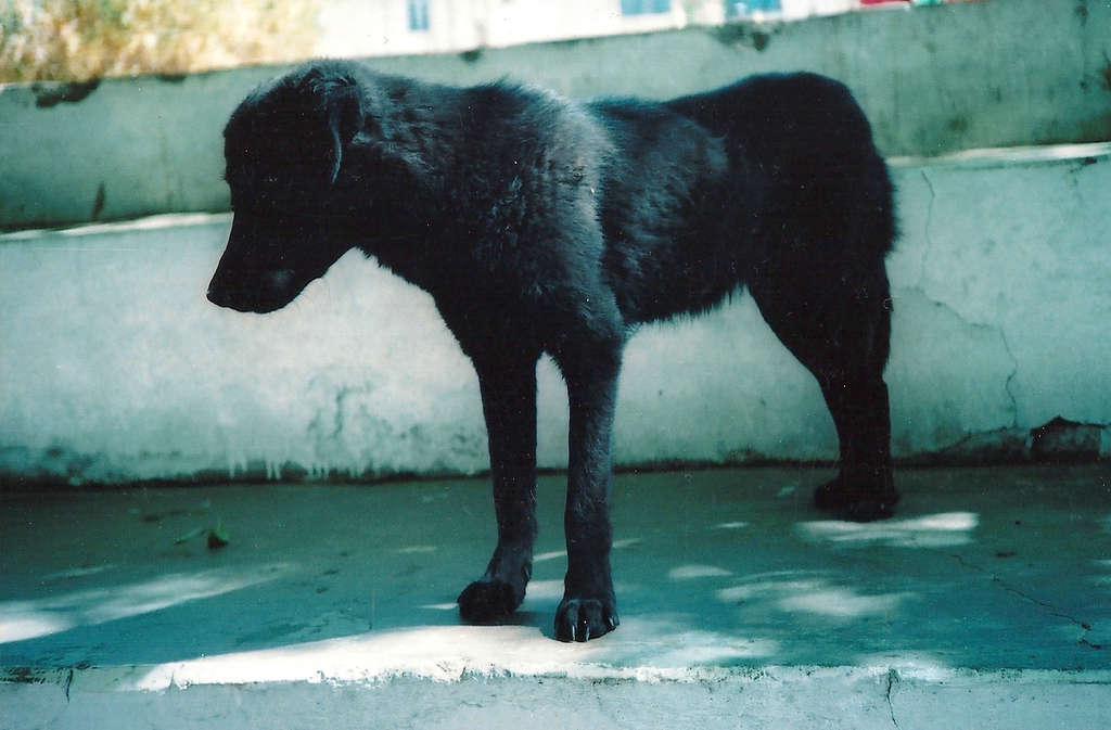 Black Dog in Leh. Photo: Sanjin Đumišić.