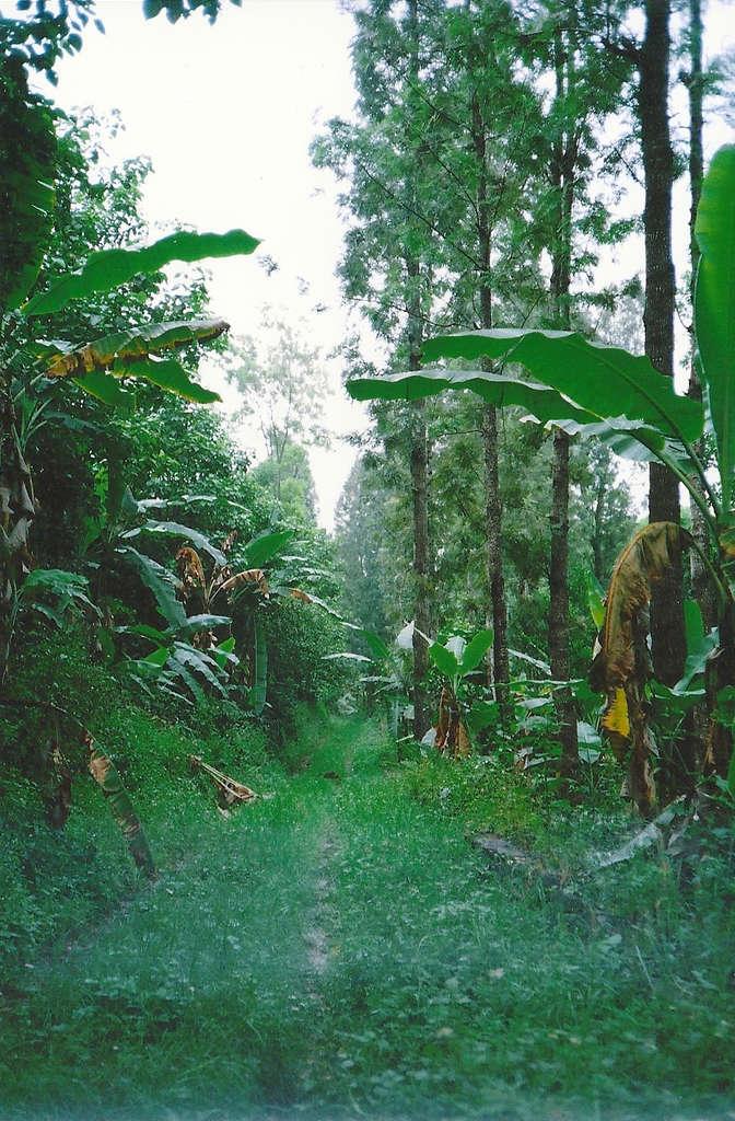 Forest path in Kodaikanal. Photo: Sanjin Đumišić.