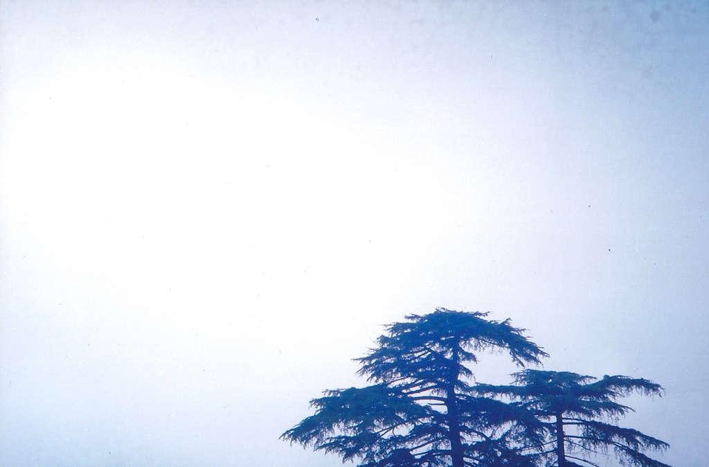 Treetop in McLeod Ganj. Photo: Sanjin Đumišić.