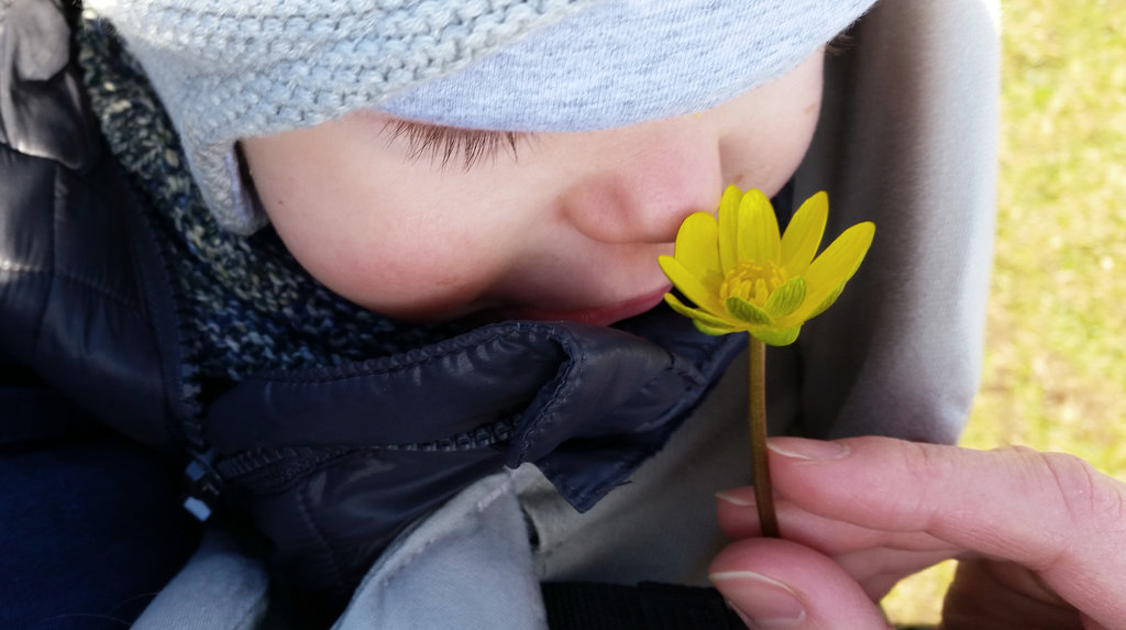 Baby Florens with Öland flower. Photo: Sanjin Đumišić.