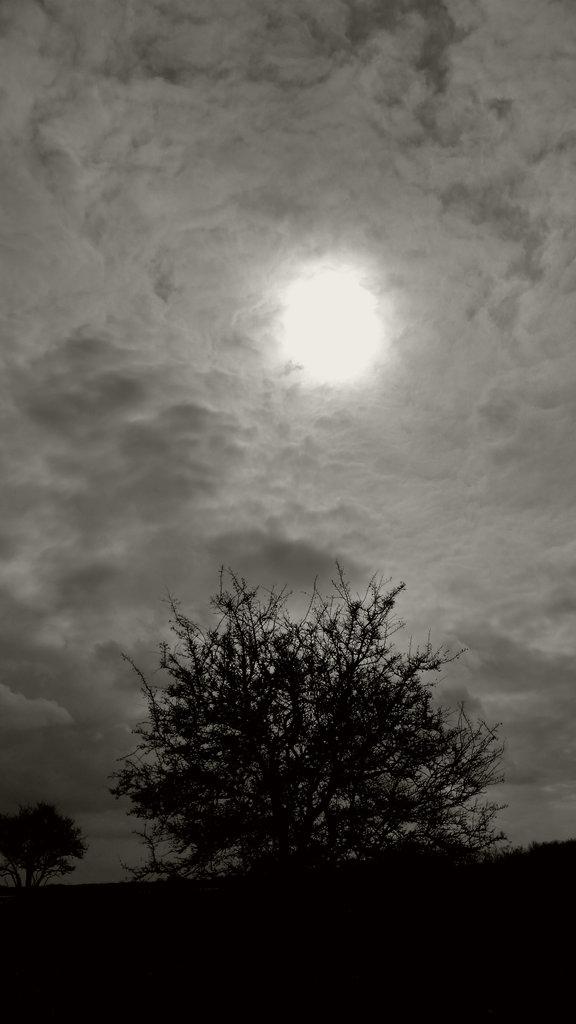Tree of divine light on Öland. Photo: Sanjin Đumišić.