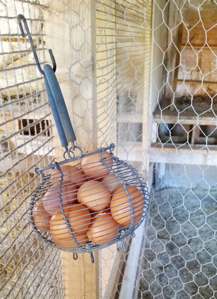Fresh organic farm eggs. Photo: Sanjin Đumišić.