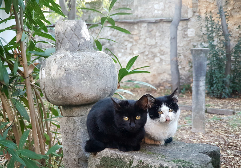 Cats of Mostar. Photo: Sanjin Đumišić.