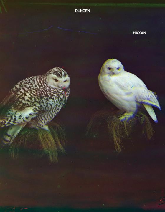 'Häxan' by Dungen