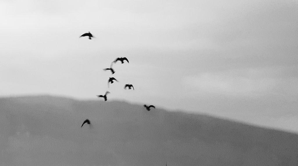 Mostar birds. Photo: Sanjin Đumišić.