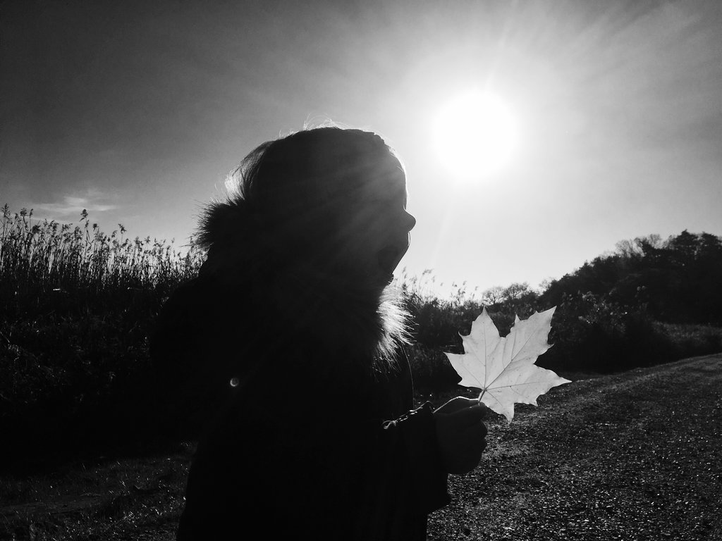 Late Swedish Autumn. Photo: Sanjin Đumišić.