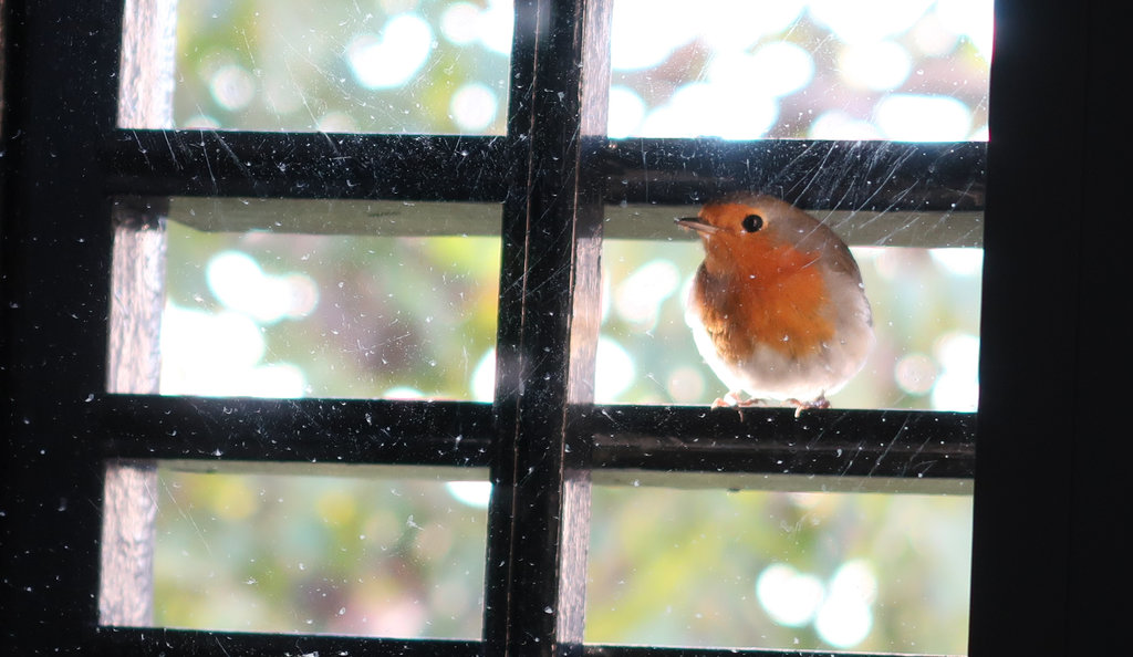 November bird in the window. Photo: Sanjin Đumišić.